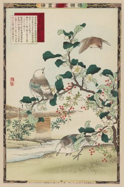 Kono Bairei (Japanese, 1844-1895). <em>Tea Plant Blossoms (Camellia sinensis) and White-cheeked Starling, from the series Bairei's Picture Album of Birds and Flowers</em>, 1883. Color woodblock print on paper, Other: 14 1/2 x 9 1/2 in. (36.8 x 24.1 cm). Brooklyn Museum, Gift of the Estate of Dr. Eleanor Z. Wallace, 2007.32.29 (Photo: Brooklyn Museum, 2007.32.29_IMLS_PS3.jpg)