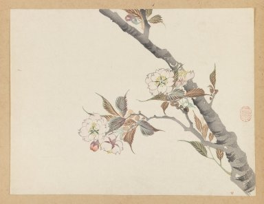 Mochizuki Gyokusen (Japanese, 1794-1852). <em>Branch of Blossoming Cherry</em>. Woodblock color print, 9 1/2 x 12 7/16 in. (24.1 x 31.6 cm). Brooklyn Museum, Gift of the Estate of Dr. Eleanor Z. Wallace, 2007.32.32 (Photo: Brooklyn Museum, 2007.32.32_IMLS_PS3.jpg)