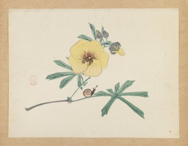 Mochizuki Gyokusen (Japanese, 1794-1852). <em>Yellow Flower with Snail</em>, ca. 1850. Woodblock color print, 9 7/16 x 12 7/16 in. (24 x 31.6 cm). Brooklyn Museum, Gift of the Estate of Dr. Eleanor Z. Wallace, 2007.32.33 (Photo: Brooklyn Museum, 2007.32.33_IMLS_PS3.jpg)