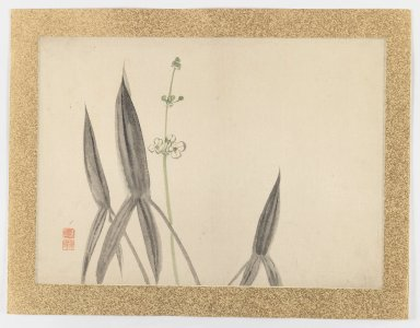 Nishiyama Hoen (Japanese, 1804-1867). <em>[Untitled] (Flower Subject)</em>, 1855. Ink and light color on paper, 20 5/8 x 14 7/8 in. (52.4 x 37.8 cm). Brooklyn Museum, Gift of the Estate of Dr. Eleanor Z. Wallace, 2007.32.42 (Photo: Brooklyn Museum, 2007.32.42_IMLS_PS3.jpg)