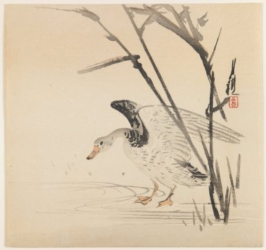 Ogata Gekko (Japanese, 1859-1920). <em>Wild Goose in Reeds</em>, ca. 1890-1910. Color woodblock print on paper, 9 1/2 x 9 15/16 in. (24.1 x 25.2 cm). Brooklyn Museum, Gift of the Estate of Dr. Eleanor Z. Wallace, 2007.32.64 (Photo: Brooklyn Museum, 2007.32.64_IMLS_PS3.jpg)