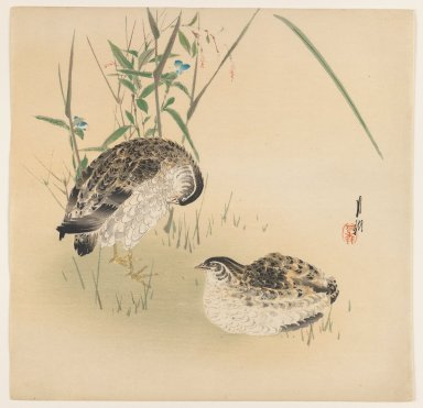 Ogata Gekko (Japanese, 1859-1920). <em>Two Quail</em>, ca. 1890-1910. Color woodblock print on paper, 9 1/2 x 9 3/4 in. (24.1 x 24.8 cm). Brooklyn Museum, Gift of the Estate of Dr. Eleanor Z. Wallace, 2007.32.65 (Photo: Brooklyn Museum, 2007.32.65_IMLS_PS3.jpg)