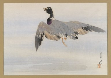 Ogata Gekko (Japanese, 1859-1920). <em>Flying Mallard</em>, ca. 1890-1900. Color woodblock print with silver pigment on paper, 8 1/8 x 11 11/16 in. (20.6 x 29.7 cm). Brooklyn Museum, Gift of the Estate of Dr. Eleanor Z. Wallace, 2007.32.78 (Photo: Brooklyn Museum, 2007.32.78_IMLS_PS4.jpg)