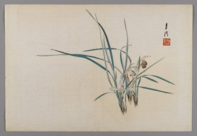 Ogata Gekko (Japanese, 1859-1920). <em>Iris</em>, ca. 1890-1900. Color woodblock print with silver pigment on paper, 9 3/8 x 13 3/4 in. (23.8 x 34.9 cm). Brooklyn Museum, Gift of the Estate of Dr. Eleanor Z. Wallace, 2007.32.80 (Photo: Brooklyn Museum, 2007.32.80_IMLS_PS4.jpg)