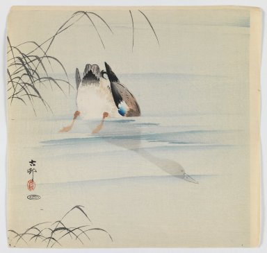 Ohara Koson (Shoson) (Japanese, 1877-1945). <em>Diving Mallard</em>, ca. 1910. Woodblock color print, 9 1/2 x 9 7/8 in. (24.1 x 25.1 cm). Brooklyn Museum, Gift of the Estate of Dr. Eleanor Z. Wallace, 2007.32.84 (Photo: Brooklyn Museum, 2007.32.84_IMLS_PS3.jpg)