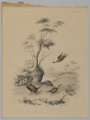 James Ryder van Brunt (American, 1820-1916). <em>Three Pheasants</em>, 1873. Graphite and watercolor on paper, Sheet: 10 x 7 9/16 in. (25.4 x 19.2 cm). Brooklyn Museum, Gift of Mrs. H. Derderian, 2008.61.2 (Photo: Brooklyn Museum, 2008.61.2_PS2.jpg)