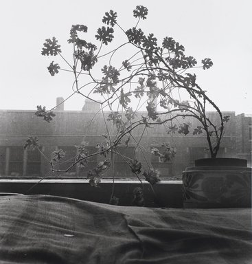 Nathan Lerner (American, 1913-1997). <em>Window Plant</em>, 1935, printed later. Gelatin silver photograph, Sheet: 11 x 11 in. (27.9 x 27.9 cm). Brooklyn Museum, Gift of Kiyoko Lerner, 2011.25.4. © artist or artist's estate (Photo: Brooklyn Museum, 2011.25.4_PS4.jpg)