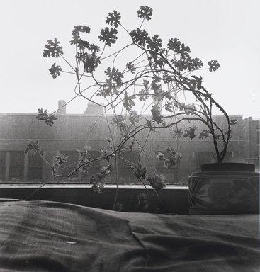Nathan Lerner (American, 1913-1997). <em>Window Plant</em>, 1935, printed later. Gelatin silver photograph, Sheet: 11 x 11 in. (27.9 x 27.9 cm). Brooklyn Museum, Gift of Kiyoko Lerner, 2011.25.4. © artist or artist's estate (Photo: Brooklyn Museum, 2011.25.4_PS4.jpg)