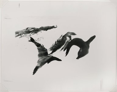 Nathan Lerner (American, 1913-1997). <em>Seals, Chicago</em>, 1970, printed later. Gelatin silver photograph, sheet: 10 3/4 x 14 in. (27.3 x 35.6 cm). Brooklyn Museum, Gift of Kiyoko Lerner, 2011.25.63. © artist or artist's estate (Photo: Brooklyn Museum, 2011.25.63_PS6.jpg)