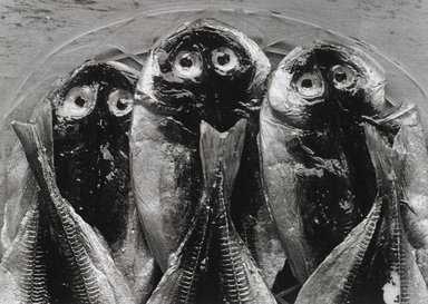 Nathan Lerner (American, 1913-1997). <em>Three Fish, Yugawara, Japan 1974</em>, Printed 1983. Selenium-toned print, Sheet: 16 x 20 in. (40.6 x 50.8 cm). Brooklyn Museum, Gift of Kiyoko Lerner, 2011.25.78. © artist or artist's estate (Photo: Brooklyn Museum, 2011.25.78_PS4.jpg)