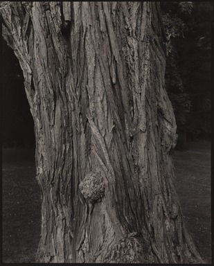 Stephen Shore (American, born 1947). <em>Annandale-on-Hudson, New York</em>, 1995. Gelatin silver photograph, 10 × 8 in. (25.4 × 20.3 cm). Brooklyn Museum, Gift of The Carol and Arthur Goldberg Collection, 2016.18.11. © artist or artist's estate (Photo: , 2016.18.11_PS9.jpg)