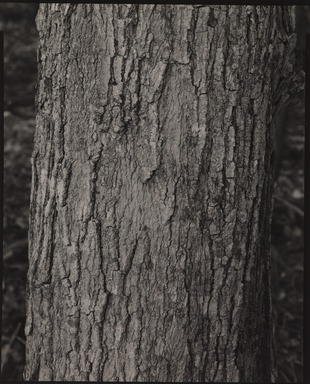 Stephen Shore (American, born 1947). <em>Keene Valley, New York</em>, 1992. Gelatin silver photograph, 10 × 8 in. (25.4 × 20.3 cm). Brooklyn Museum, Gift of The Carol and Arthur Goldberg Collection, 2016.18.7. © artist or artist's estate (Photo: , 2016.18.7_PS9.jpg)