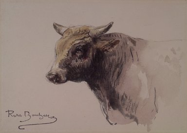 Rosa Bonheur (French, 1822-1899). <em>Head of a Bull</em>, n.d. Watercolor and graphite on cream wove paper, 4 15/16 x 6 7/8 in. (12.5 x 17.5 cm). Brooklyn Museum, Gift of John Hill Morgan, 22.80 (Photo: Brooklyn Museum, 22.80.jpg)