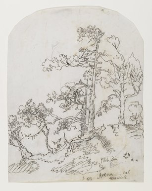 Ralph Albert Blakelock (American, 1847-1919). <em>Pitch Pine, Point Arena, California</em>, ca. 1869-1871. Ink and graphite on moderately thick, moderately textured, cream colored wove paper, Sheet (rounded at top): 10 15/16 x 8 1/2 in. (27.8 x 21.6 cm). Brooklyn Museum, Gift of Mr. and Mrs. E. Le Grand Beers in memory of Edwin Beers, 27.17 (Photo: Brooklyn Museum, 27.17_PS6.jpg)