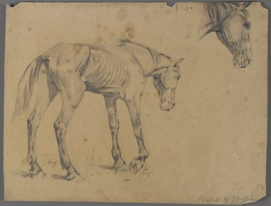 Philip H. Wolfrom (American, 1870-1904). <em>Horse and Horse's Head</em>, ca. 1915-1920. Graphite on paper, Sheet: 10 1/16 x 13 1/4 in. (25.6 x 33.7 cm). Brooklyn Museum, Gift of Anna Wolfrom Dove, 27.810 (Photo: Brooklyn Museum, 27.810_PS4.jpg)