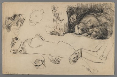 Philip H. Wolfrom (American, 1870-1904). <em>Studies of Lions and Tigers</em>, n.d. Charcoal on paper, Sheet: 12 13/16 x 19 11/16 in. (32.5 x 50 cm). Brooklyn Museum, Gift of Anna Wolfrom Dove, 27.812 (Photo: Brooklyn Museum, 27.812_IMLS_PS3.jpg)