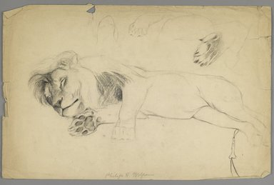Philip H. Wolfrom (American, 1870-1904). <em>Sleeping Lion</em>, n.d. Graphite on paper, Sheet: 12 13/16 x 19 3/4 in. (32.5 x 50.2 cm). Brooklyn Museum, Gift of Anna Wolfrom Dove, 27.814 (Photo: Brooklyn Museum, 27.814_PS6.jpg)