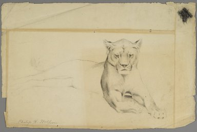 Philip H. Wolfrom (American, 1870-1904). <em>Lioness</em>, n.d. Graphite on paper, Sheet: 12 x 18 3/4 in. (30.5 x 47.6 cm). Brooklyn Museum, Gift of Anna Wolfrom Dove, 27.817 (Photo: Brooklyn Museum, 27.817_PS6.jpg)