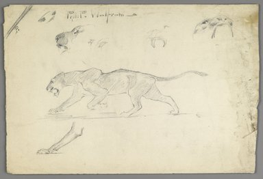 Philip H. Wolfrom (American, 1870-1904). <em>Studies of a Striding Lion</em>, n.d. Graphite on paper, Sheet: 9 13/16 x 14 3/8 in. (24.9 x 36.5 cm). Brooklyn Museum, Gift of Anna Wolfrom Dove, 27.818 (Photo: Brooklyn Museum, 27.818_PS6.jpg)