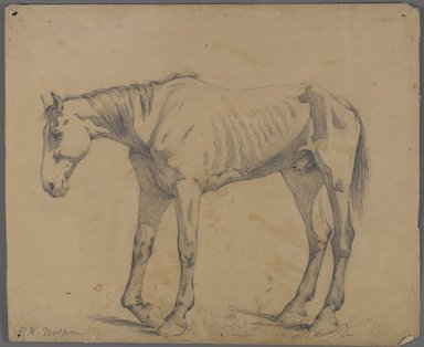 Philip H. Wolfrom (American, 1870-1904). <em>Horse</em>, n.d. Graphite on paper, Sheet: 10 1/8 x 12 1/4 in. (25.7 x 31.1 cm). Brooklyn Museum, Gift of Anna Wolfrom Dove, 27.819 (Photo: Brooklyn Museum, 27.819_PS4.jpg)
