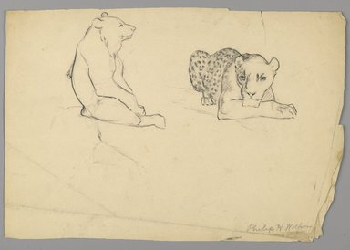Philip H. Wolfrom (American, 1870-1904). <em>Cheetah and Bear</em>, n.d. Graphite on paper, Sheet: 9 3/4 x 14 3/8 in. (24.8 x 36.5 cm). Brooklyn Museum, Gift of Anna Wolfrom Dove, 27.820 (Photo: Brooklyn Museum, 27.820_PS6.jpg)