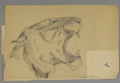Philip H. Wolfrom (American, 1870-1904). <em>Head of Roaring Lion (recto) and Bison (verso)</em>, n.d. Graphite and charcoal on paper, Sheet: 9 7/8 x 15 in. (25.1 x 38.1 cm). Brooklyn Museum, Gift of Anna Wolfrom Dove, 27.822 (Photo: Brooklyn Museum, 27.822_PS6.jpg)