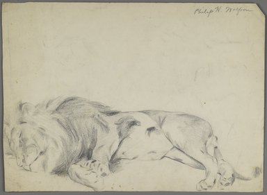 Philip H. Wolfrom (American, 1870-1904). <em>Sleeping Lion</em>, n.d. Graphite on paper, Sheet: 10 3/8 x 14 1/8 in. (26.4 x 35.9 cm). Brooklyn Museum, Gift of Anna Wolfrom Dove, 27.823 (Photo: Brooklyn Museum, 27.823_PS6.jpg)