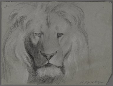 Philip H. Wolfrom (American, 1870-1904). <em>Head of Lion</em>, n.d. Graphite and white chalk on paper, Sheet: 9 3/4 x 12 13/16 in. (24.8 x 32.5 cm). Brooklyn Museum, Gift of Anna Wolfrom Dove, 27.824 (Photo: Brooklyn Museum, 27.824.jpg)