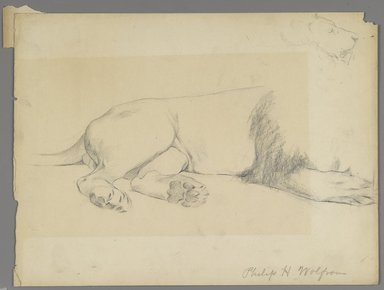 Philip H. Wolfrom (American, 1870-1904). <em>Studies of Lion</em>, n.d. Graphite on paper, Sheet: 8 15/16 x 11 7/8 in. (22.7 x 30.2 cm). Brooklyn Museum, Gift of Anna Wolfrom Dove, 27.825 (Photo: Brooklyn Museum, 27.825_PS6.jpg)