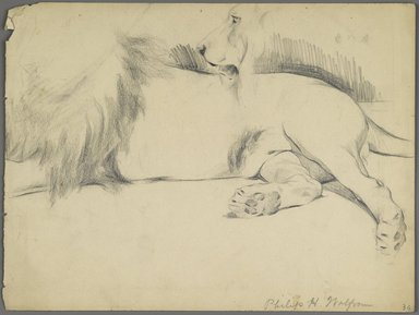 Philip H. Wolfrom (American, 1870-1904). <em>Studies of Lion</em>, n.d. Graphite on paper, Sheet: 8 15/16 x 11 7/8 in. (22.7 x 30.2 cm). Brooklyn Museum, Gift of Anna Wolfrom Dove, 27.827 (Photo: Brooklyn Museum, 27.827_PS6.jpg)