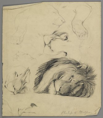 Philip H. Wolfrom (American, 1870-1904). <em>Studies of Lion</em>, n.d. Graphite on paper, Sheet: 12 7/8 x 11 in. (32.7 x 27.9 cm). Brooklyn Museum, Gift of Anna Wolfrom Dove, 27.830 (Photo: Brooklyn Museum, 27.830_PS6.jpg)