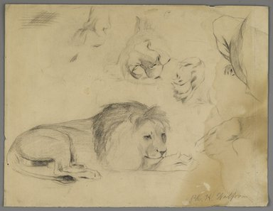 Philip H. Wolfrom (American, 1870-1904). <em>Studies of Lion</em>, n.d. Graphite on paper, Sheet: 9 7/8 x 12 7/8 in. (25.1 x 32.7 cm). Brooklyn Museum, Gift of Anna Wolfrom Dove, 27.831 (Photo: Brooklyn Museum, 27.831_PS6.jpg)
