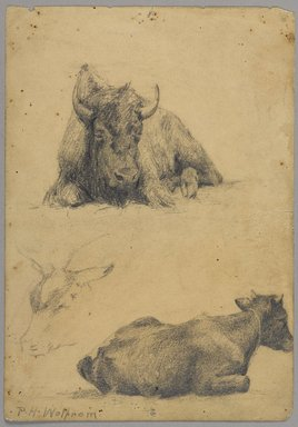 Philip H. Wolfrom (American, 1870-1904). <em>Reclining Bull and Head of Goat (recto) and Reclining Bull (verso)</em>, n.d. Graphite on paper, Sheet: 9 15/16 x 6 15/16 in. (25.2 x 17.6 cm). Brooklyn Museum, Gift of Anna Wolfrom Dove, 27.832 (Photo: Brooklyn Museum, 27.832_PS9.jpg)
