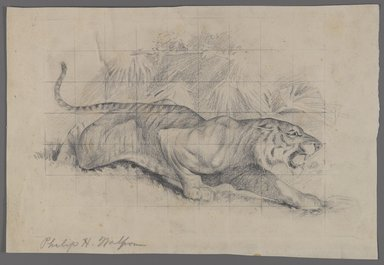 Philip H. Wolfrom (American, 1870-1904). <em>Tiger in Landscape</em>, n.d. Graphite on paper, Sheet: 8 1/8 x 12 in. (20.6 x 30.5 cm). Brooklyn Museum, Gift of Anna Wolfrom Dove, 27.834 (Photo: Brooklyn Museum, 27.834_PS4.jpg)