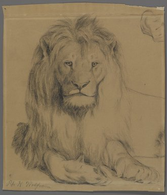 Philip H. Wolfrom (American, 1870-1904). <em>Lion</em>, n.d. Graphite on paper, Sheet: 9 3/4 x 8 1/2 in. (24.8 x 21.6 cm). Brooklyn Museum, Gift of Anna Wolfrom Dove, 27.835 (Photo: Brooklyn Museum, 27.835_PS4.jpg)