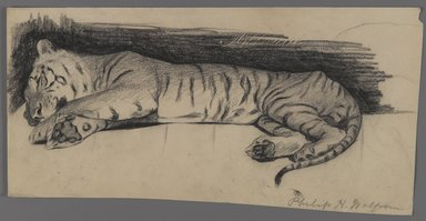 Philip H. Wolfrom (American, 1870-1904). <em>Sleeping Tiger</em>, n.d. Charcoal on paper, Sheet: 6 3/8 x 12 7/16 in. (16.2 x 31.6 cm). Brooklyn Museum, Gift of Anna Wolfrom Dove, 27.836 (Photo: Brooklyn Museum, 27.836_PS4.jpg)