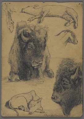 Philip H. Wolfrom (American, 1870-1904). <em>Studies of Bison, Calf and Goat</em>, n.d. Graphite and ink on paper, Sheet: 9 3/4 x 7 in. (24.8 x 17.8 cm). Brooklyn Museum, Gift of Anna Wolfrom Dove, 27.837 (Photo: Brooklyn Museum, 27.837_PS4.jpg)