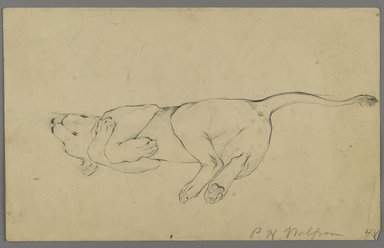 Philip H. Wolfrom (American, 1870-1904). <em>Sleeping Lioness</em>, n.d. Graphite on paper, Sheet: 5 5/8 x 9 1/16 in. (14.3 x 23 cm). Brooklyn Museum, Gift of Anna Wolfrom Dove, 27.838 (Photo: Brooklyn Museum, 27.838_side1_PS6.jpg)