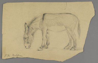 Philip H. Wolfrom (American, 1870-1904). <em>Donkey</em>, n.d. Graphite on paper, Sheet (irregular): 6 1/4 x 9 11/16 in. (15.9 x 24.6 cm). Brooklyn Museum, Gift of Anna Wolfrom Dove, 27.839 (Photo: Brooklyn Museum, 27.839_PS6.jpg)