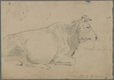Philip H. Wolfrom (American, 1870-1904). <em>Seated Bull</em>, n.d. Graphite on paper, Sheet: 6 15/16 x 9 15/16 in. (17.6 x 25.2 cm). Brooklyn Museum, Gift of Anna Wolfrom Dove, 27.840 (Photo: Brooklyn Museum, 27.840_PS4.jpg)