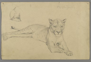 Philip H. Wolfrom (American, 1870-1904). <em>Seated Lioness</em>, n.d. Graphite on paper, Sheet: 6 x 9 1/4 in. (15.2 x 23.5 cm). Brooklyn Museum, Gift of Anna Wolfrom Dove, 27.841 (Photo: Brooklyn Museum, 27.841_PS6.jpg)