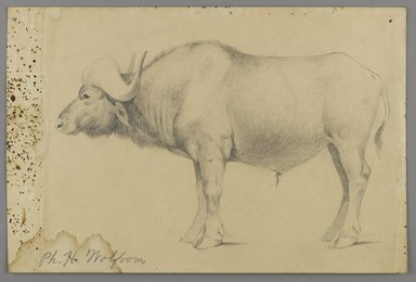Philip H. Wolfrom (American, 1870-1904). <em>Water Buffalo</em>, n.d. Graphite on paper, Sheet: 6 x 9 1/16 in. (15.2 x 23 cm). Brooklyn Museum, Gift of Anna Wolfrom Dove, 27.842 (Photo: Brooklyn Museum, 27.842_PS6.jpg)