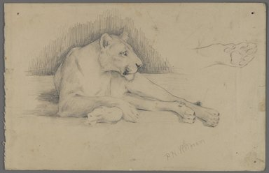 Philip H. Wolfrom (American, 1870-1904). <em>Seated Lioness</em>, n.d. Graphite on paper, Sheet: 6 x 9 5/16 in. (15.2 x 23.7 cm). Brooklyn Museum, Gift of Anna Wolfrom Dove, 27.843 (Photo: Brooklyn Museum, 27.843_PS4.jpg)