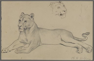 Philip H. Wolfrom (American, 1870-1904). <em>Seated Lioness</em>, n.d. Graphite and ink on paper, Sheet: 6 x 9 5/16 in. (15.2 x 23.7 cm). Brooklyn Museum, Gift of Anna Wolfrom Dove, 27.844 (Photo: Brooklyn Museum, 27.844_PS4.jpg)