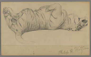 Philip H. Wolfrom (American, 1870-1904). <em>Sleeping Tiger</em>, n.d. Graphite on paper, Sheet: 5 1/2 x 8 15/16 in. (14 x 22.7 cm). Brooklyn Museum, Gift of Anna Wolfrom Dove, 27.845 (Photo: Brooklyn Museum, 27.845_PS6.jpg)