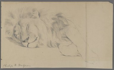 Philip H. Wolfrom (American, 1870-1904). <em>Sleeping Lion</em>, n.d. Graphite on paper, Sheet: 7 1/16 x 11 15/16 in. (17.9 x 30.3 cm). Brooklyn Museum, Gift of Anna Wolfrom Dove, 27.847 (Photo: Brooklyn Museum, 27.847_PS4.jpg)