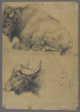 Philip H. Wolfrom (American, 1870-1904). <em>Brahman bulls (recto) and Bison and Head of Water Buffalo (verso)</em>, n.d. Graphite on paper, Sheet: 9 13/16 x 7 in. (24.9 x 17.8 cm). Brooklyn Museum, Gift of Anna Wolfrom Dove, 27.848 (Photo: Brooklyn Museum, 27.848_verso_PS4.jpg)