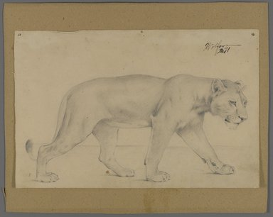 Philip H. Wolfrom (American, 1870-1904). <em>Striding Lioness</em>, n.d. Graphite on paper mounted to paperboard, Sheet: 6 x 9 1/4 in. (15.2 x 23.5 cm). Brooklyn Museum, Gift of Anna Wolfrom Dove, 27.849 (Photo: Brooklyn Museum, 27.849_PS4.jpg)