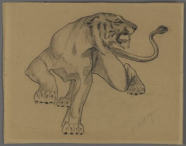 Philip H. Wolfrom (American, 1870-1904). <em>Tiger</em>, n.d. Conté crayon on paper, Sheet: 8 1/8 x 10 5/16 in. (20.6 x 26.2 cm). Brooklyn Museum, Gift of Anna Wolfrom Dove, 27.850 (Photo: Brooklyn Museum, 27.850_PS4.jpg)