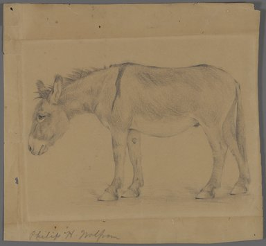 Philip H. Wolfrom (American, 1870-1904). <em>Donkey</em>, n.d. Graphite on paper, Sheet: 9 3/16 x 9 3/4 in. (23.3 x 24.8 cm). Brooklyn Museum, Gift of Anna Wolfrom Dove, 27.851 (Photo: Brooklyn Museum, 27.851_PS4.jpg)